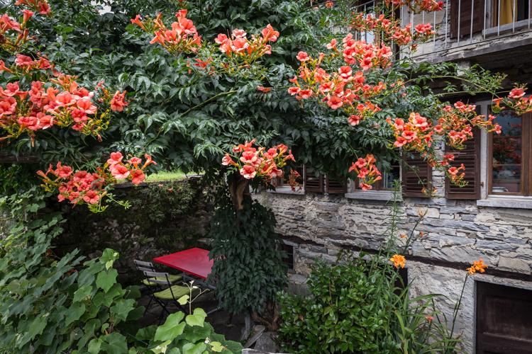 Der Sitzplatz mit dem gemütlichen Gartentisch und dem Trompetenbaum